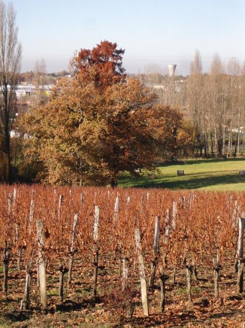 automne2007_3.jpg