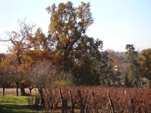 automne2007_4.jpg