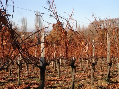 automne2007_7.jpg